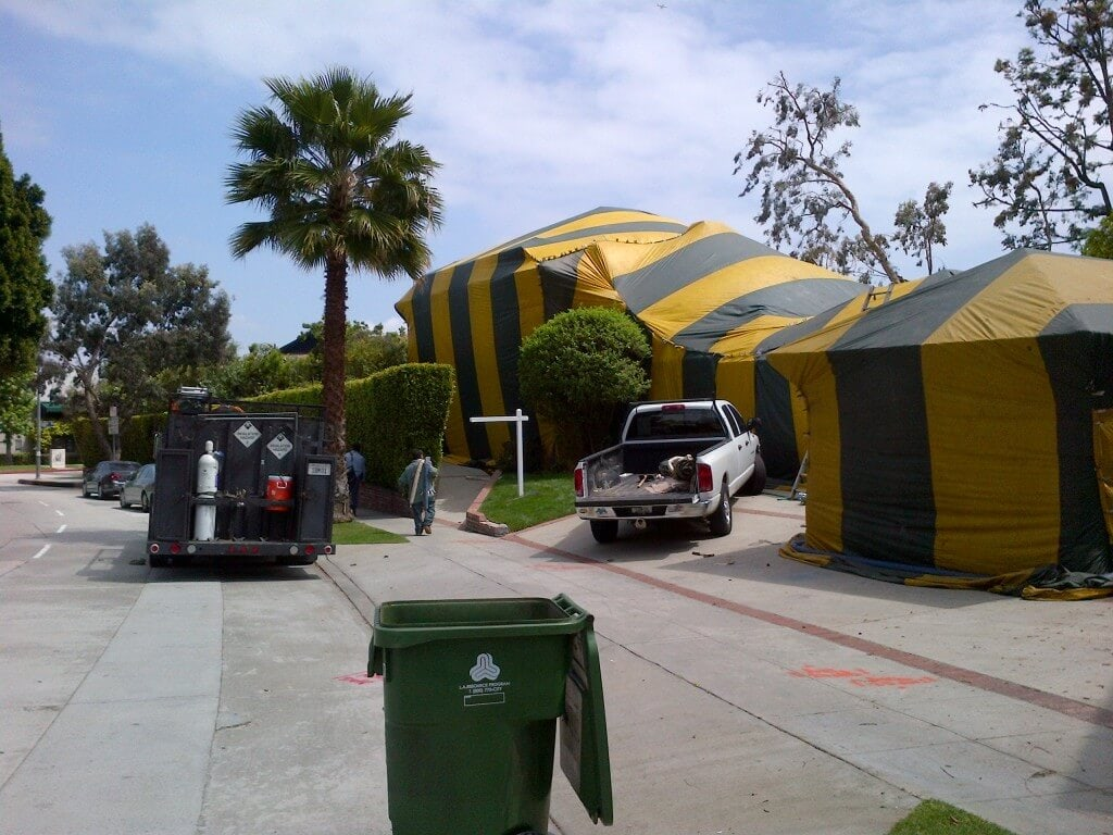 Termite fumigation los angeles ca