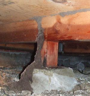 Subterraine termite mud tube