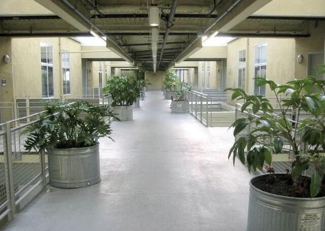 Hallway penthouse flower str