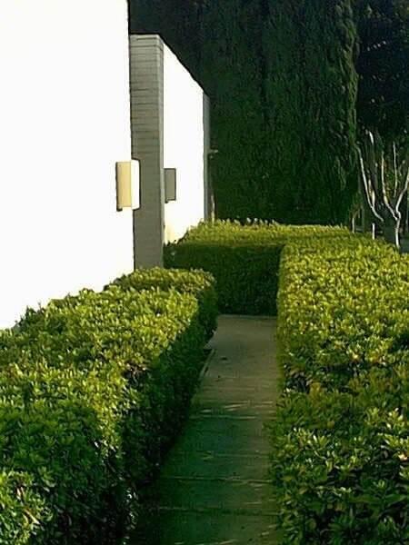 modern house box hedge