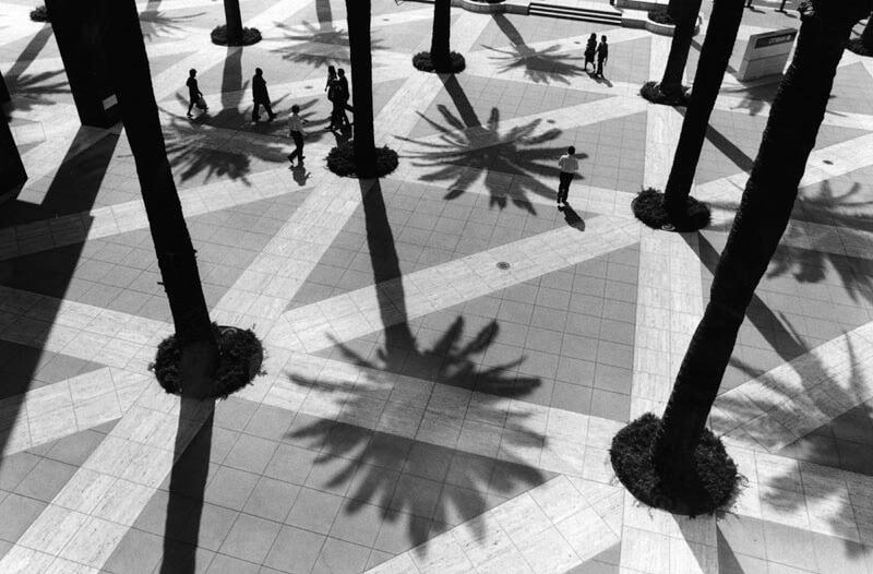 Palm Tree Shade
