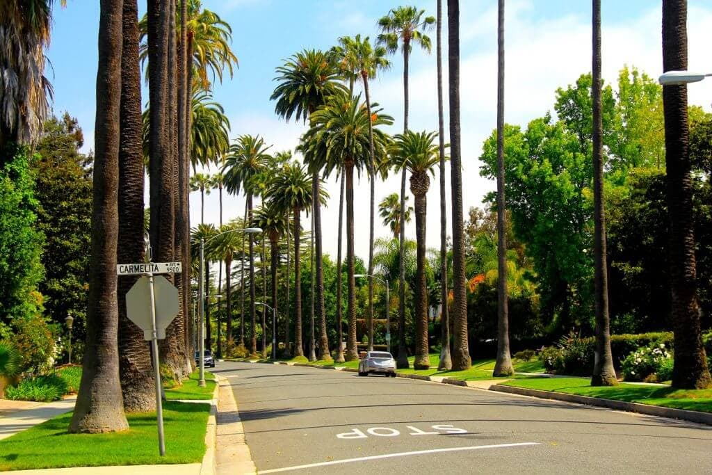 hancock-park-palm-trees-copy