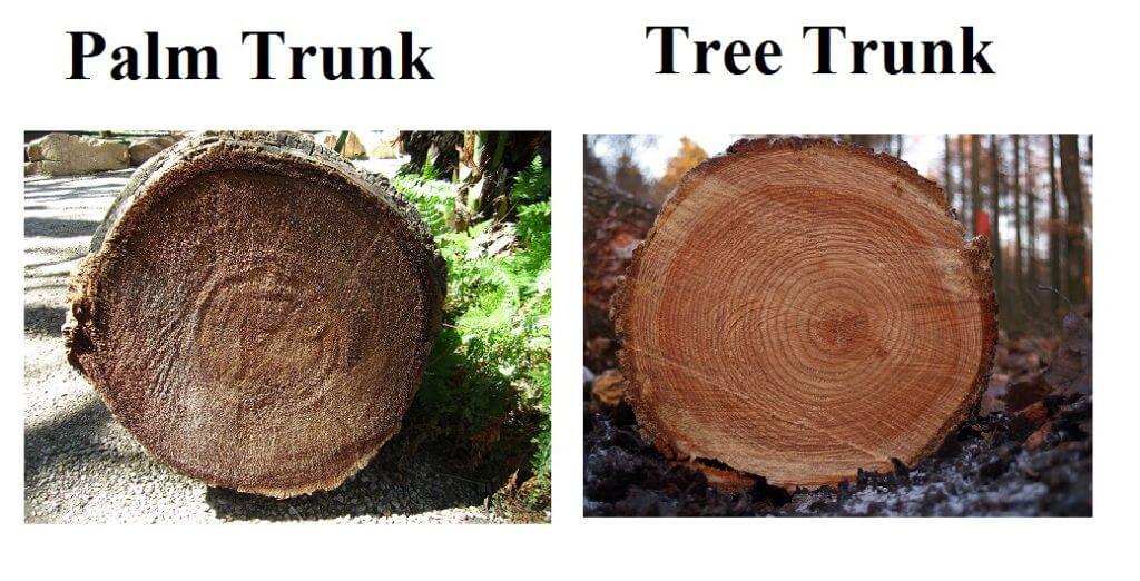 palm_tree_trunk
