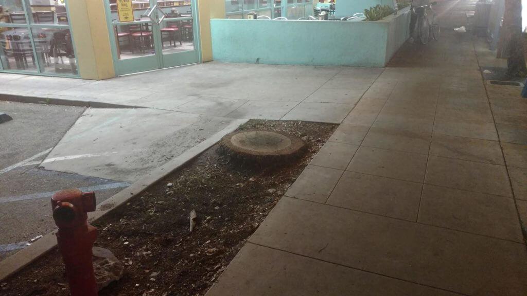 palm-tree-stump